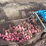 Как усовершенствовать картофелекопалку мотоблока