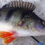 Мормышки на окуня для зимней рыбалки. Виды, как выбрать