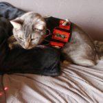 Лазерная указка — игрушка для кота или собаки