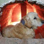 Будка-землянка для собаки