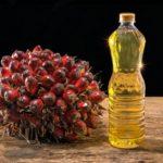 Пальмовое масло —польза и вред. Список продуктов с пальмовым маслом