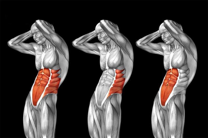 Мышцы живота —как тренировать правильно? Программа упражнений