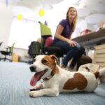 «Сегодня я работаю со своим питомцем»: как сделать офис pet-friendly