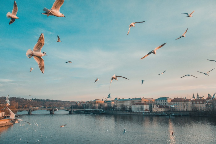 Бросить все и уехать: что нужно знать айтишнику, который мечтает работать в Чехии